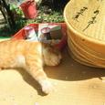 この猫は、。。。 山寺の主か!