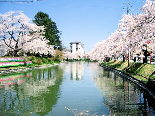 新庄城跡、お堀の桜 2006年5月